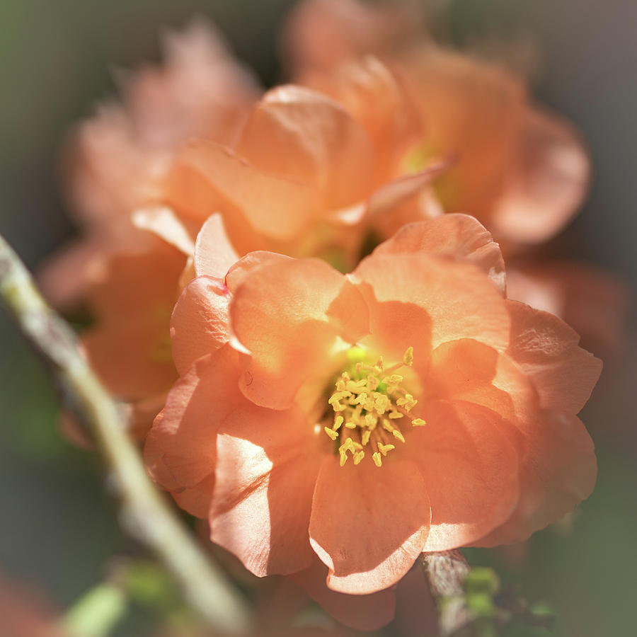 Softly Sunlit by TL Wilson Photography by Teresa Wilson