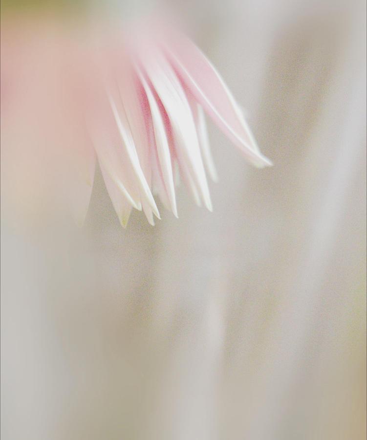 Softness of Day by The Art Of Marilyn Ridoutt-Greene