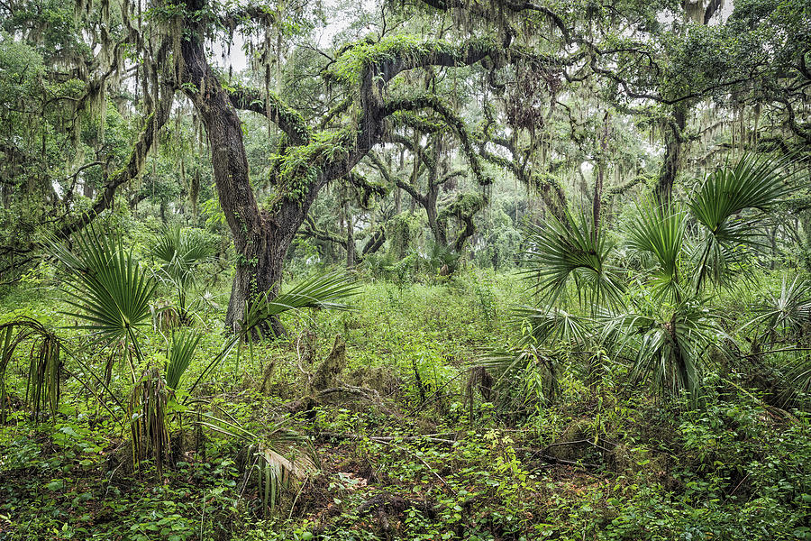 Soggy Woods by Bill Chambers