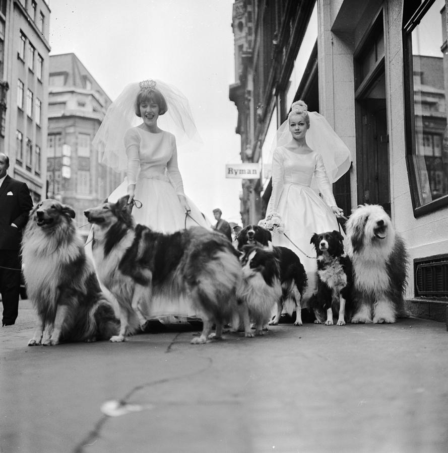 Soho Sheep Dogs Photograph by Ronald Dumont