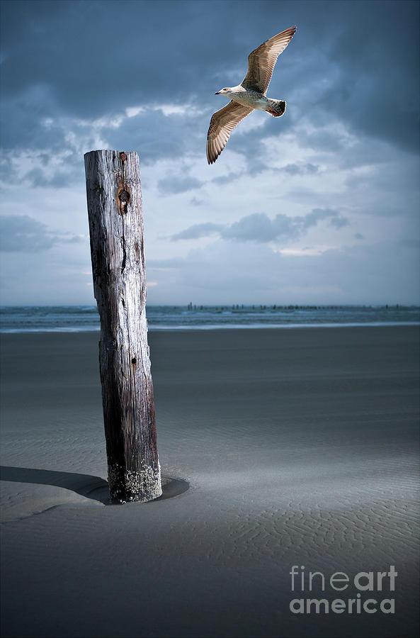 Solitary Flight by Dan Carmichael