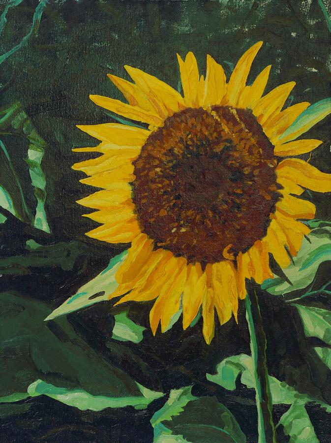 Solitary Sunflower by Phil Chadwick