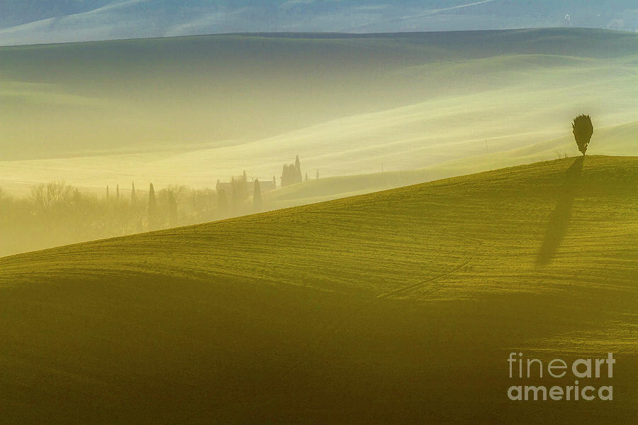 Solitary Tree on the Hill in Crete Senesi by Heiko Koehrer-Wagner