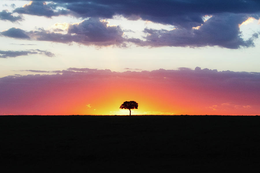 Solitary Tree Silhouette at Colorful African Sunset by Susan Schmitz