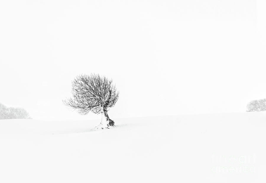 Solitude #1 by Janet Burdon