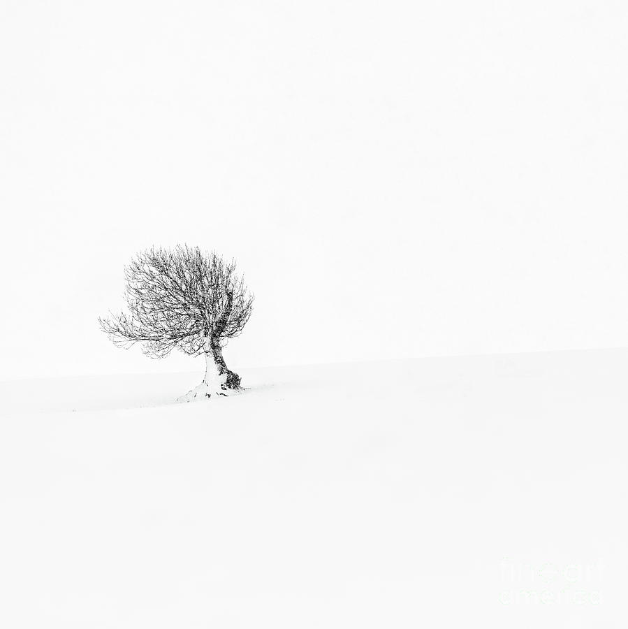 Solitude 3 by Janet Burdon