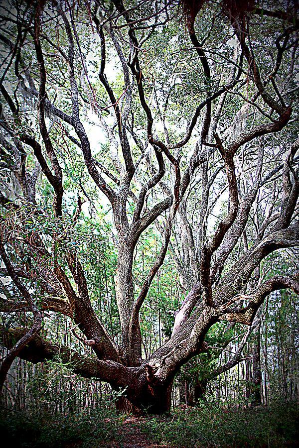 The Solitude of the Oak