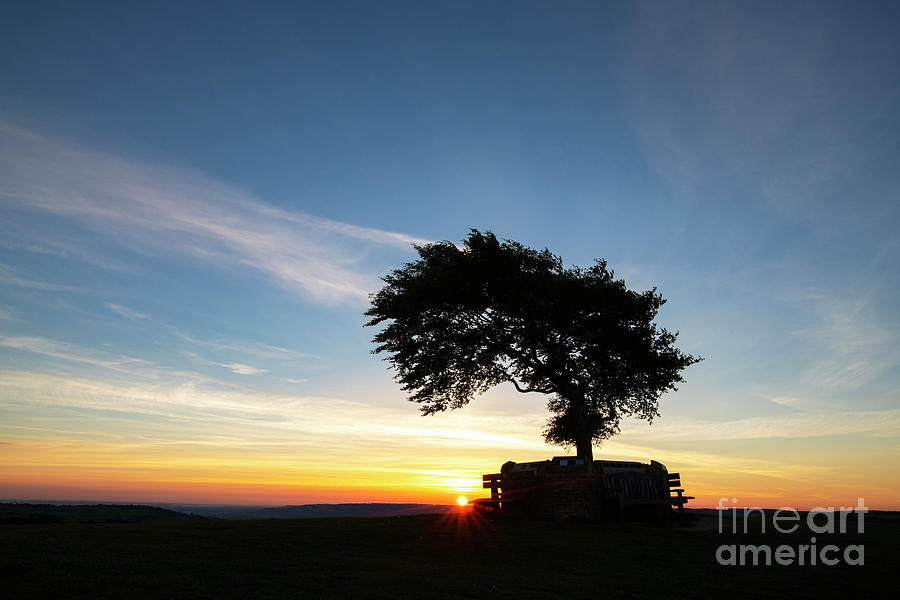 Solo Beech on Cleeve Hill at Sunrise by Tim Gainey