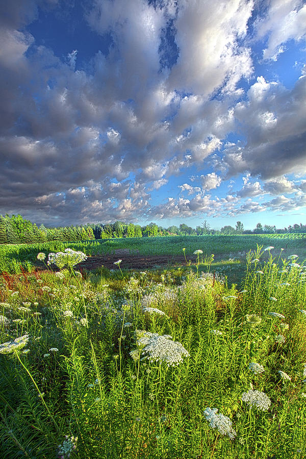Sometimes This Is All You Need by Phil Koch