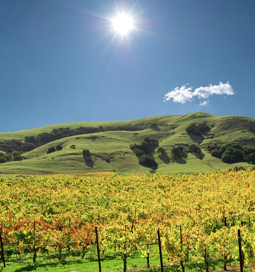 Sonoma Valley Winery Vines Photograph by Ivanastar