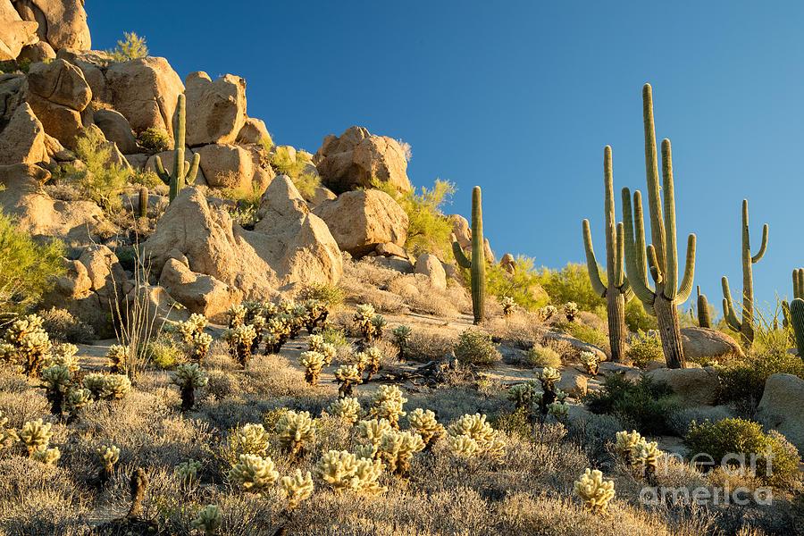 Southwest Photograph - Sonoran Desert Landscape by Stacy Funderburke