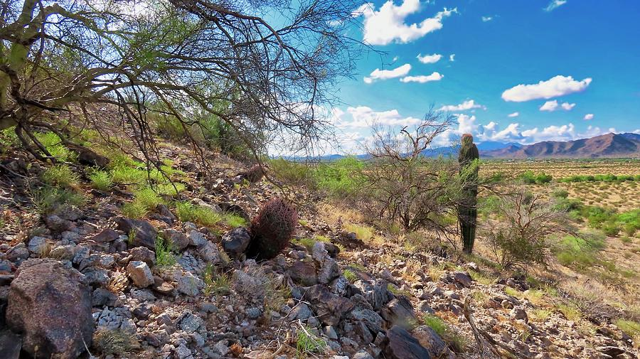 Sonoran Desert Serenity by Judy Kennedy