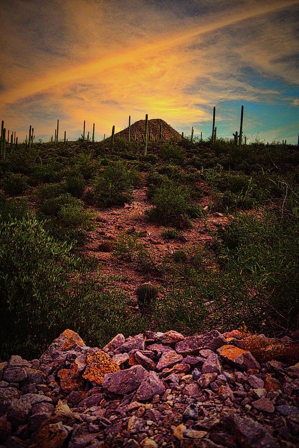Sonoran Desert Sunset  by Chance Kafka
