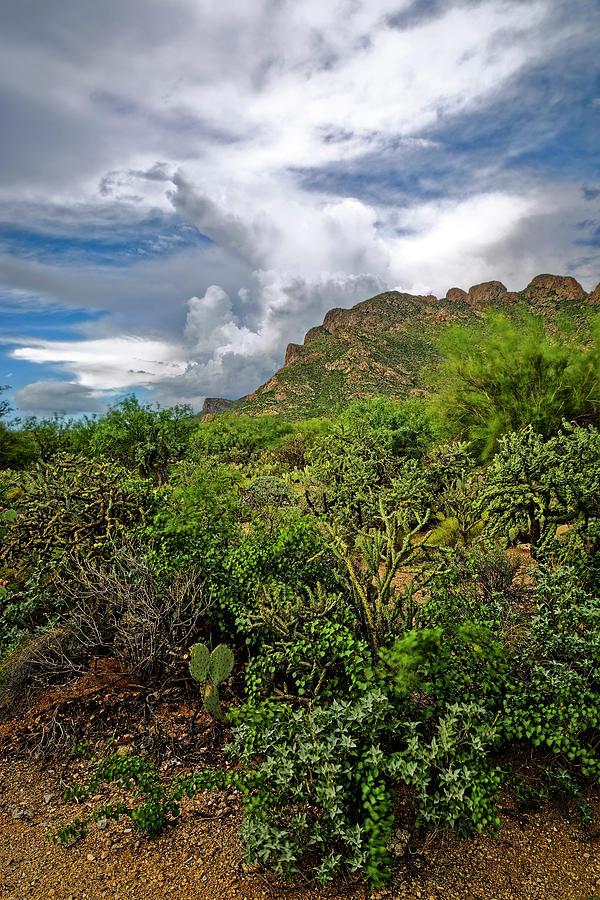 Sonoran Monsoon Season v1648 by Mark Myhaver