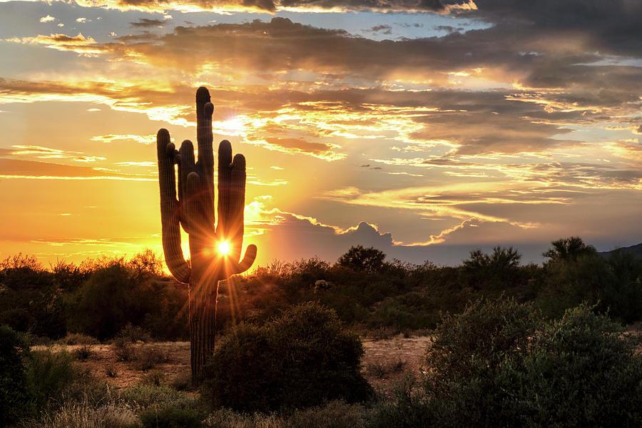 Sonoran Summer Sunshine  by Saija Lehtonen