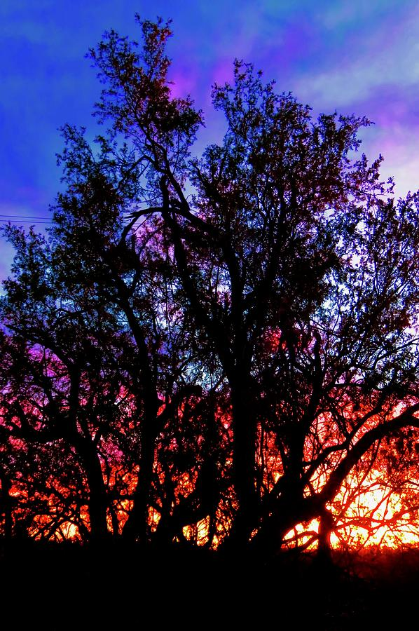 Affordable Photograph - Sonoran Sunrise Ironwood Silhouette by Judy Kennedy