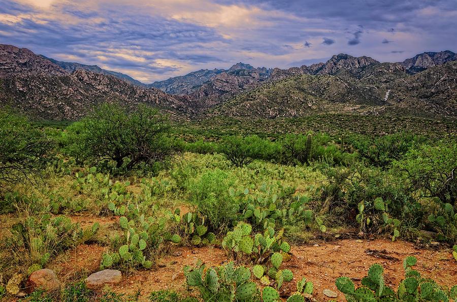 Sonoran Vista H1131 Photograph