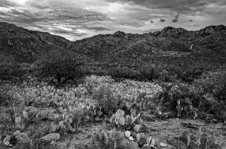 Sonoran Vista H1132 Photograph