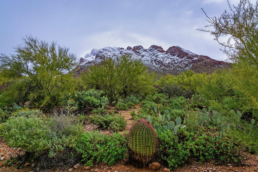 Sonoran Winter h1920 by Mark Myhaver