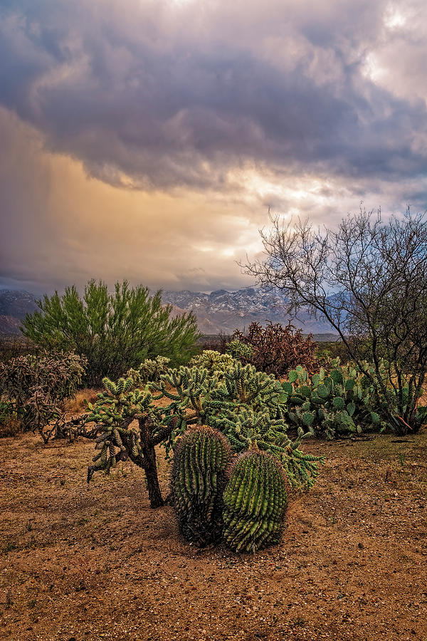 Sonoran Winter V1623 Photograph