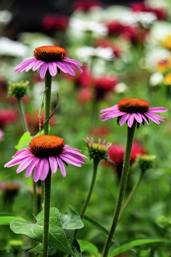 Soothing gardens by Joe Kopp