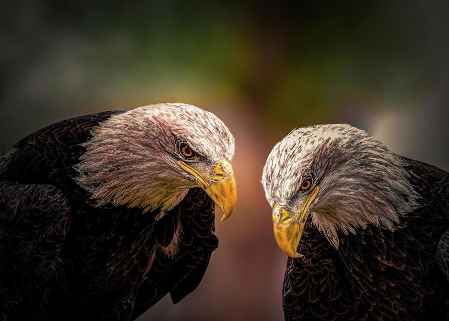 Eagles Photograph - Soul Mates by Bob Orsillo