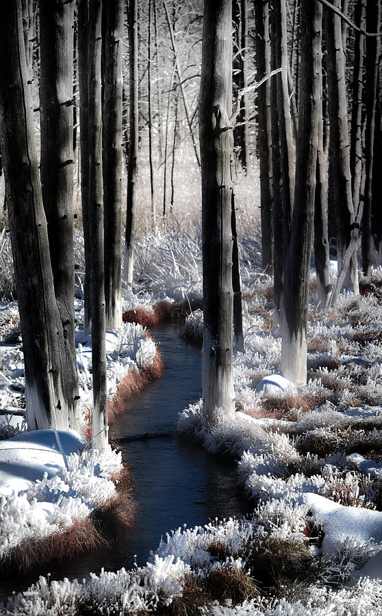 SOUL of WINTER by KAREN WILES