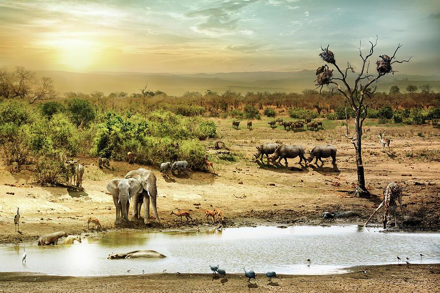South African Safari Wildlife Fantasy Scene Photograph