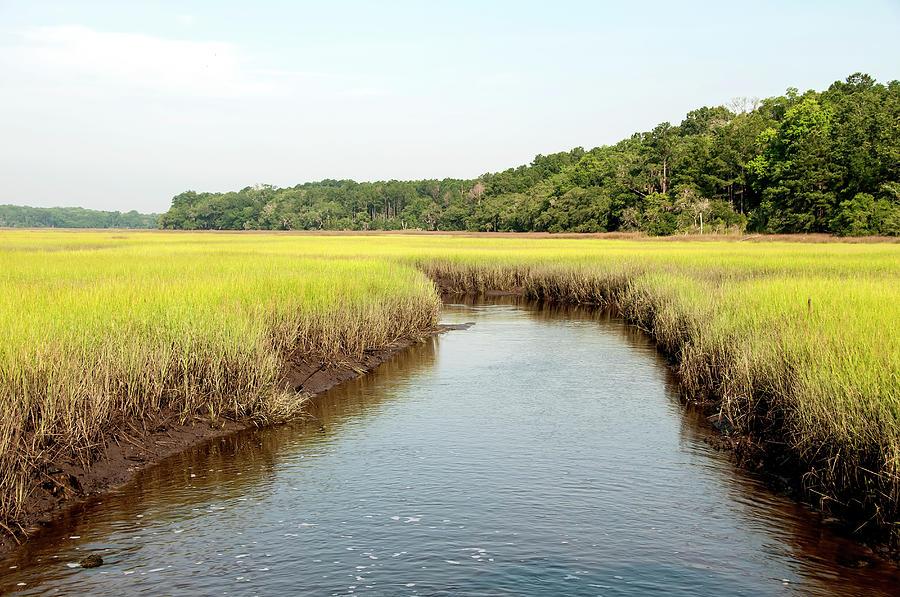South Carolina Salt Marsh Photograph by M Timothy Okeefe