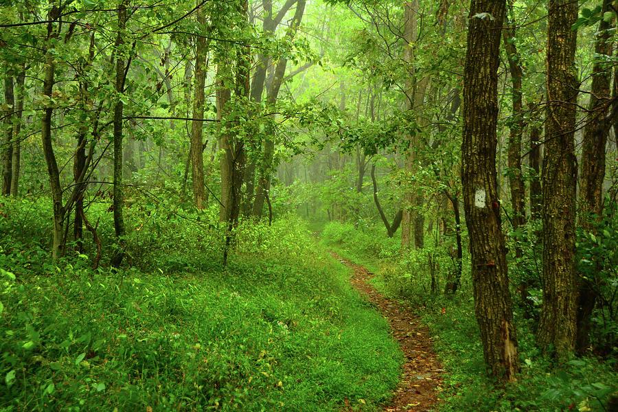 South District Shenandoah Green 2 by Raymond Salani III