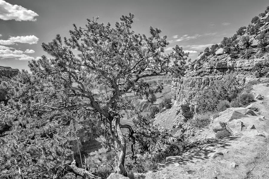 South Kaibab Trail 24 by Marisa Geraghty Photography