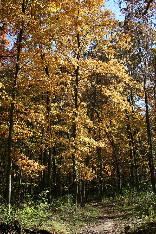 South Merwin October Walk by Dylan Punke