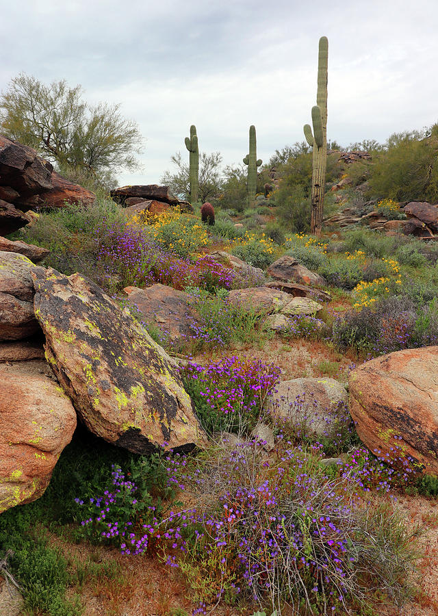 South Mountain Wildflowers Photograph