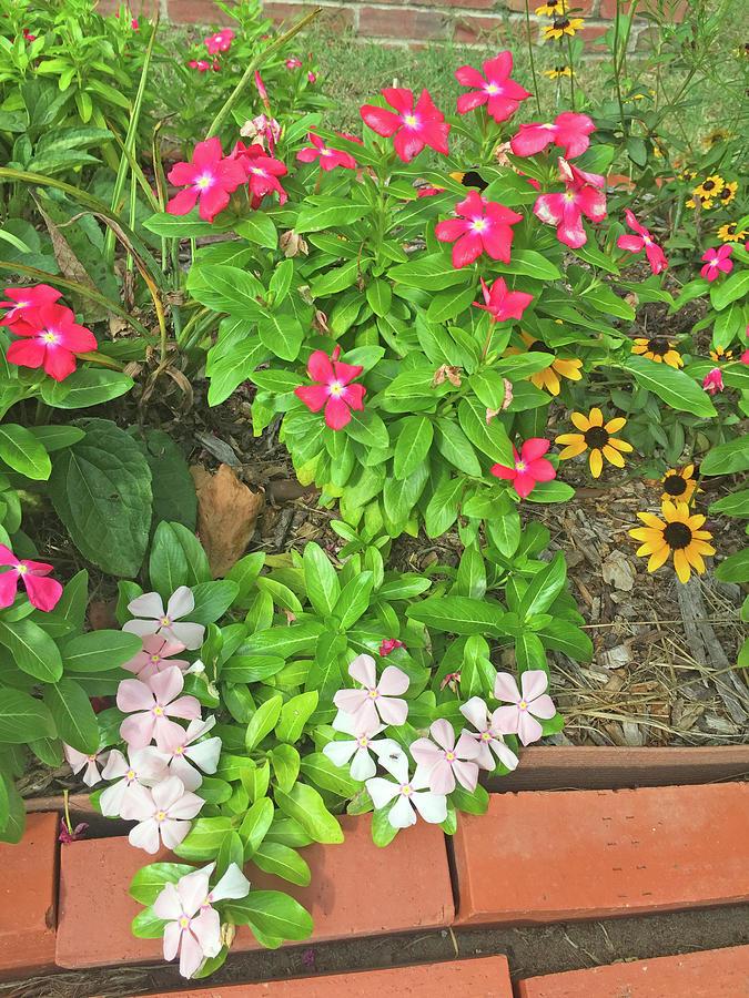 Southern Flower Garden by Matthew Seufer