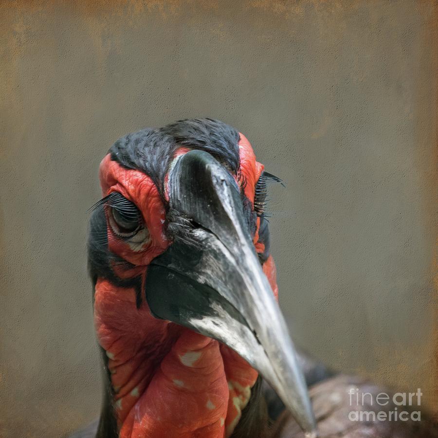 Southern Ground Hornbill by Eva Lechner
