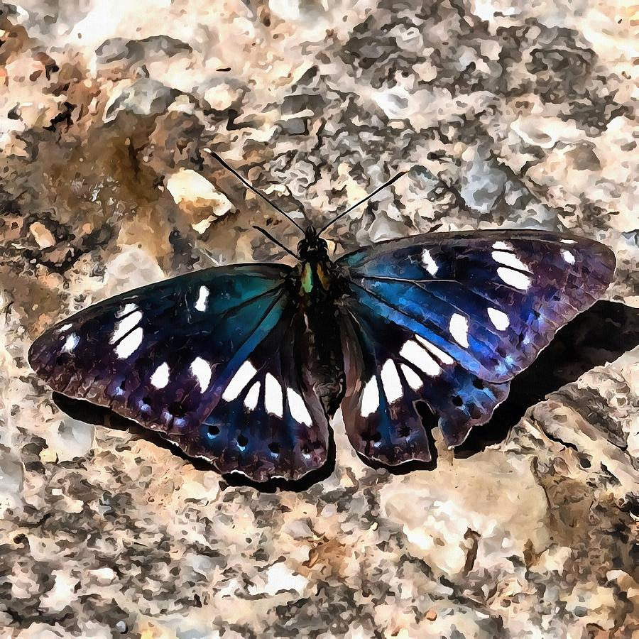 Southern White Admiral On Stone Butterfly Portrait by Taiche Acrylic Art