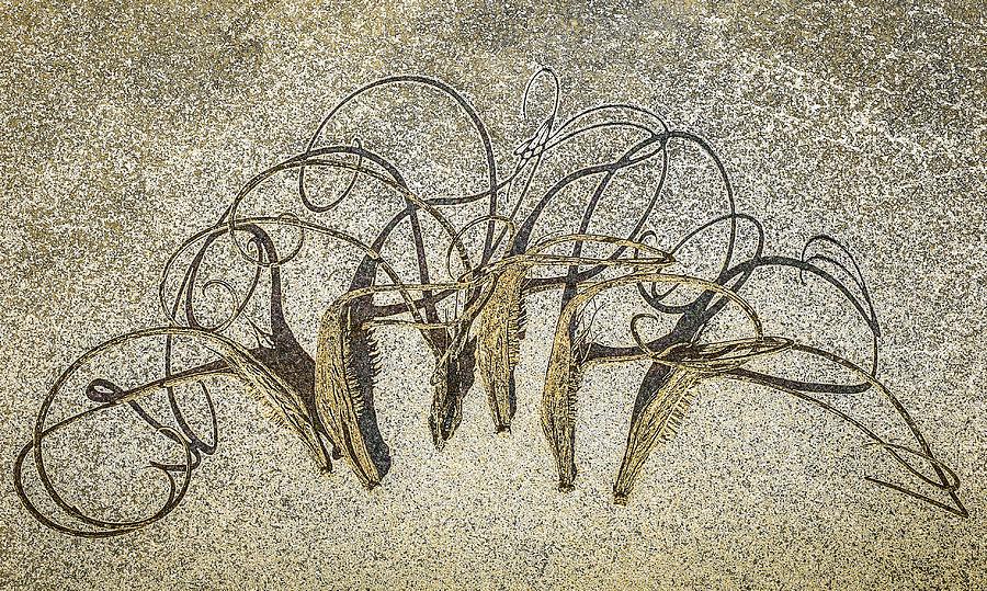 Southwest Seedpod Still Life by Veronika Countryman