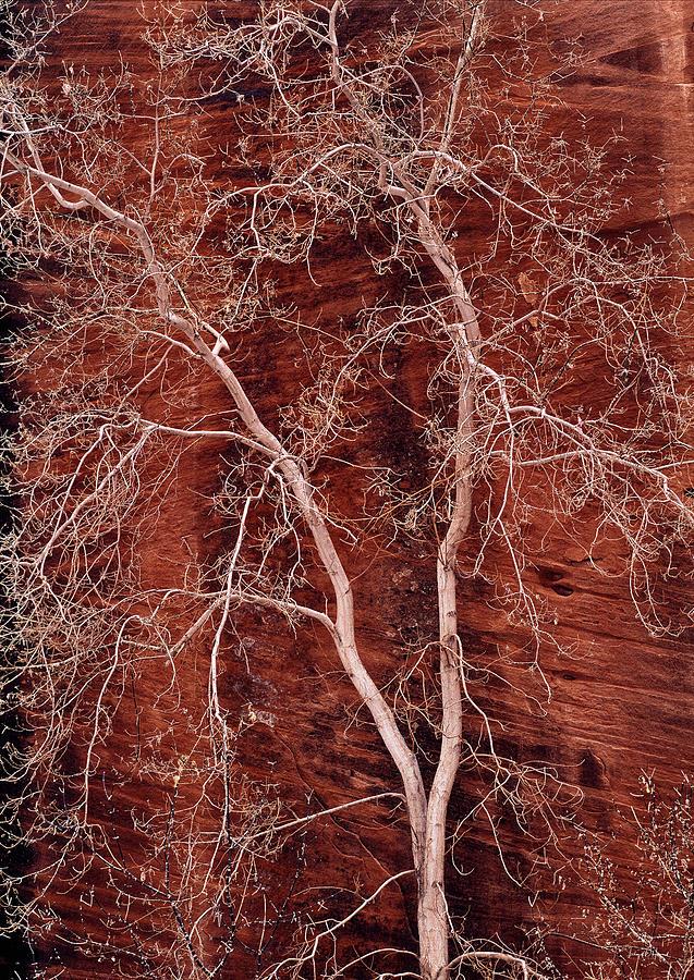 Zion National Park Photograph - Southwest Texture by Leland D Howard