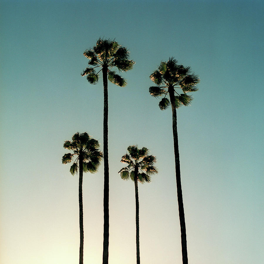 Spain, Sevilla, Palms Swaying In The Photograph by Mark Horn