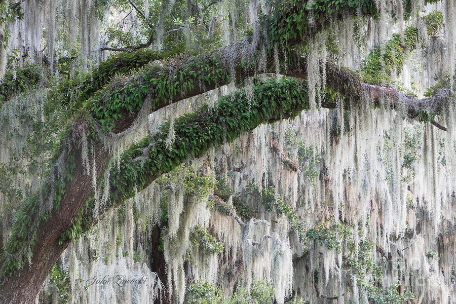 Spanish Moss Cascade by John Zawacki
