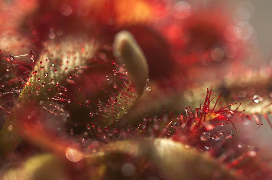 Sparkling Alien Worlds of Alice Sundew 7 by Jenny Rainbow
