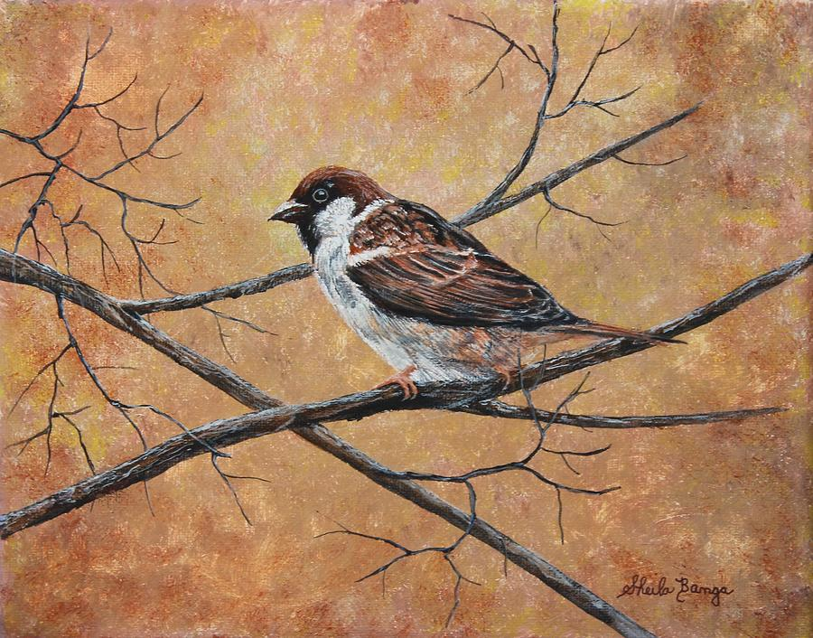 Sparrow 3 by Sheila Banga