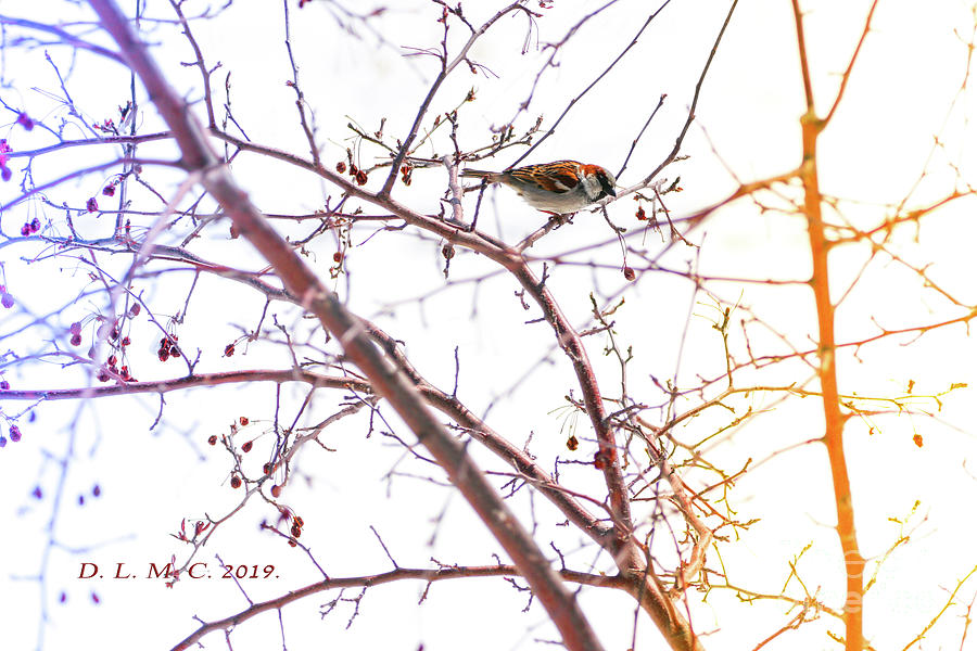 Sparrow on Crabapple Branch by Donna L Munro