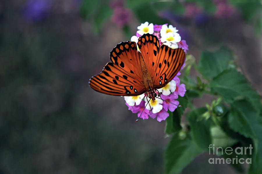 Spectacular Fall Butterfly by Amy Dundon