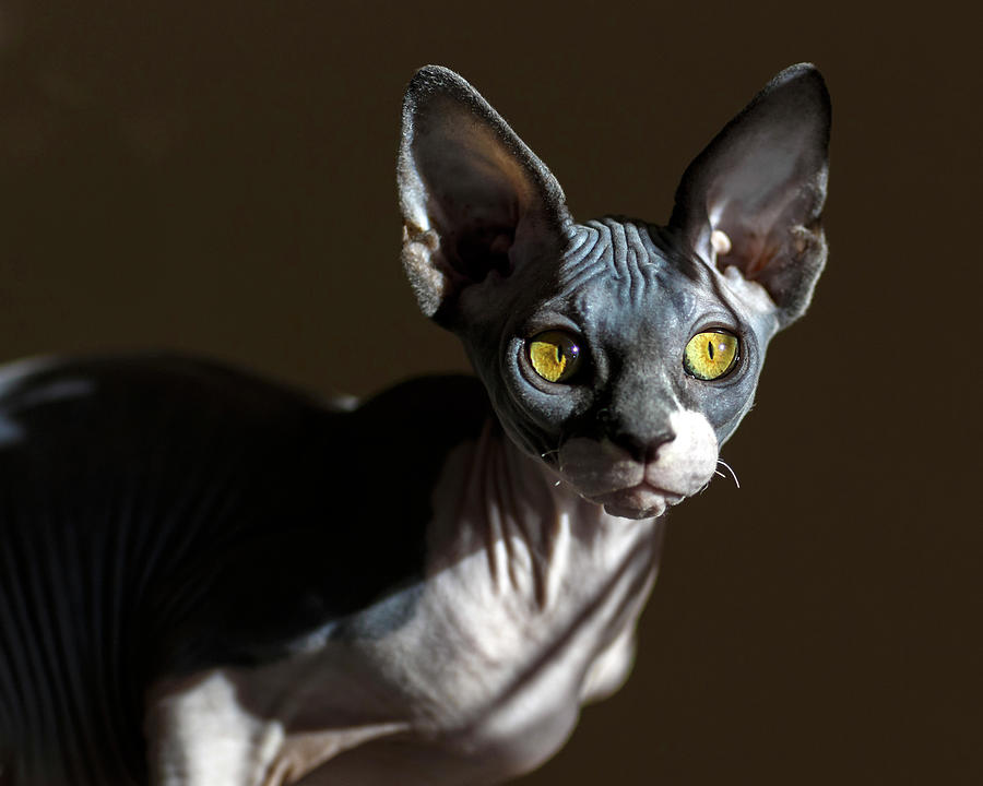 Sphynx by Wes and Dotty Weber
