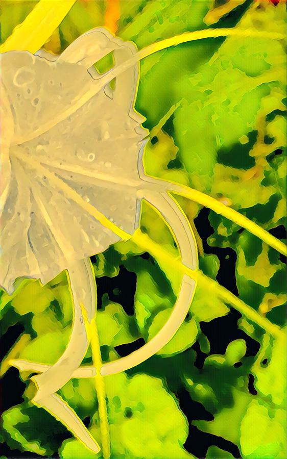 Spider Amyrillis Aloha Closeup by Joalene Young