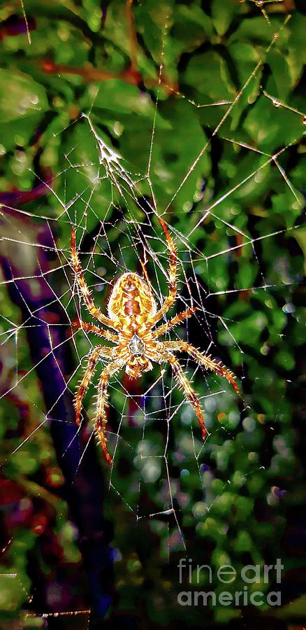 Spider in waiting by Jolanta Anna Karolska