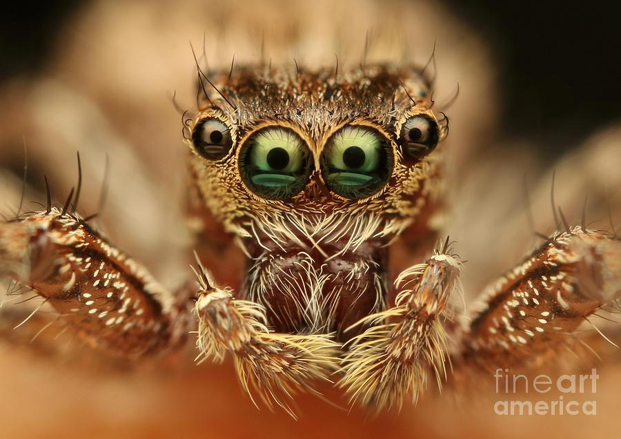 Macro Photograph - Spider by Vasekk