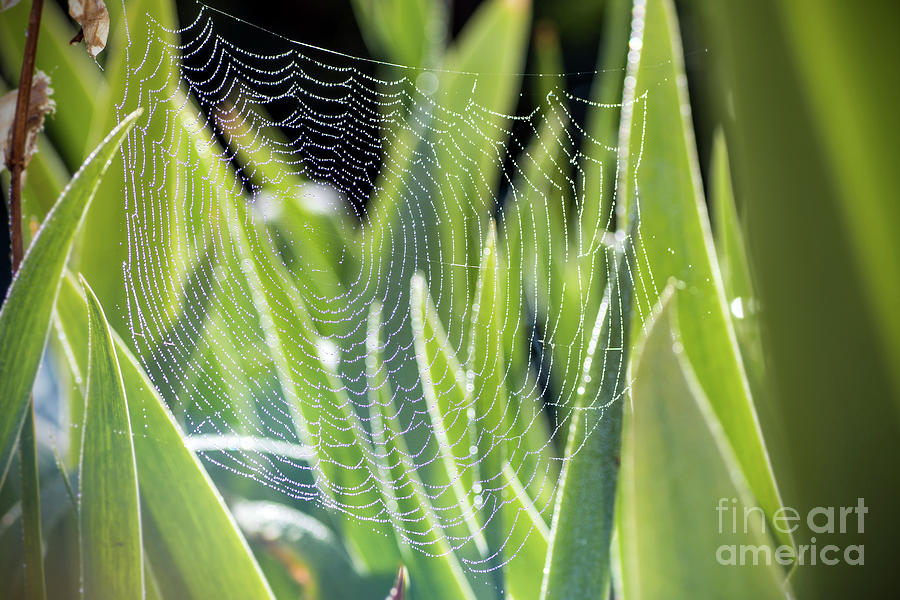 Spider web drop pattern blurred colored nature background by Gregory DUBUS