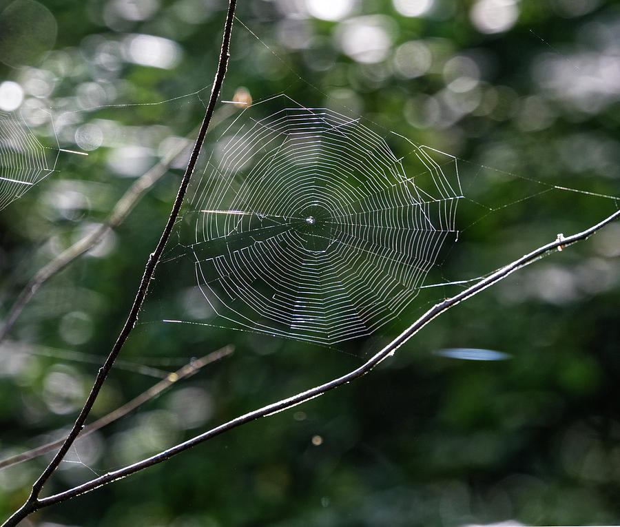 Spider Web by Paul Ross